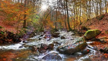 Permalink auf:Der Harz im Herbst